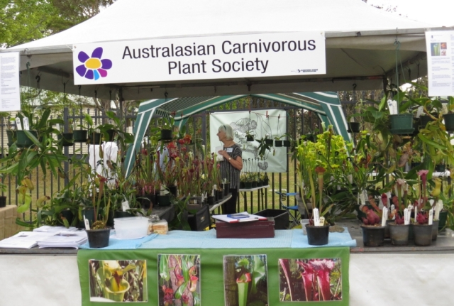 The AusCPS stall on Saturday morning